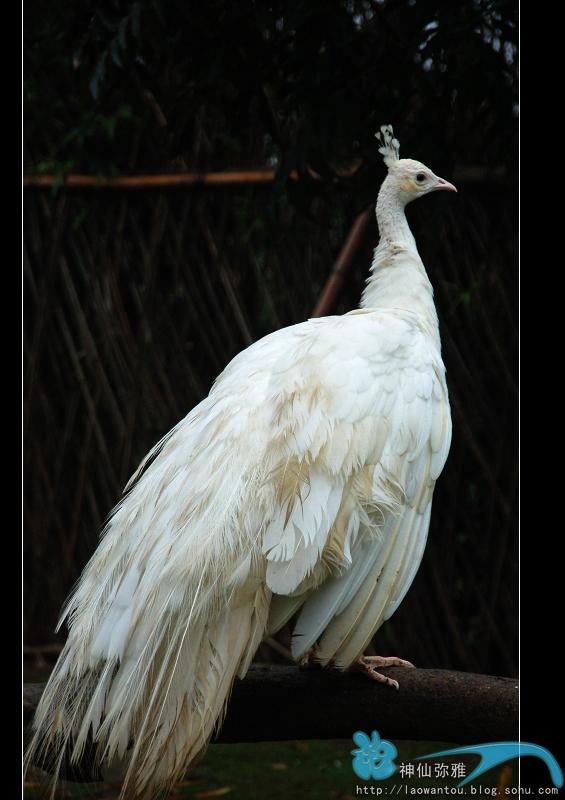 野生动物园一日游之三-神仙弥雅-搜狐博客