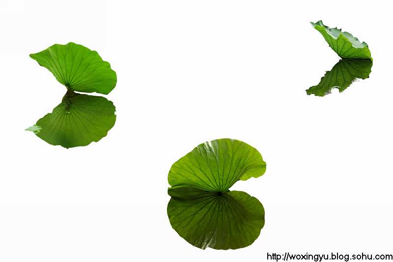背景 壁纸 绿色 绿叶 树叶 植物 桌面 800_532