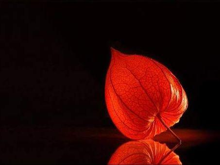 树叶灯笼的做法