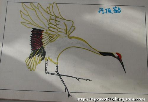 丹顶鹤铅笔画