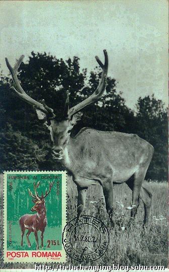 珍稀动物红鹿极限明信片