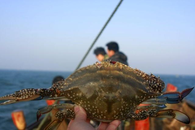 大钦岛所处的纬度位置有着适宜海带生长所