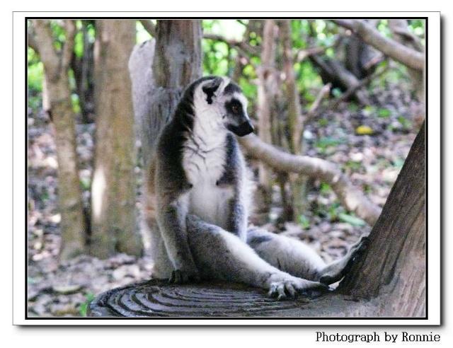 上海野生动物园里动物的避暑招数图片