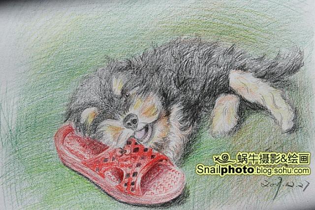 彩色铅笔画小狗教程